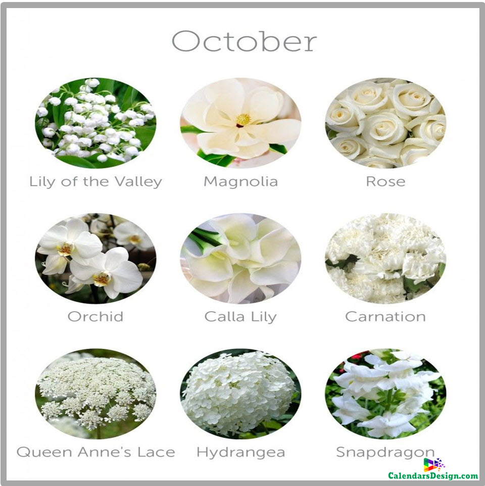 October Flowers Images and Pictures