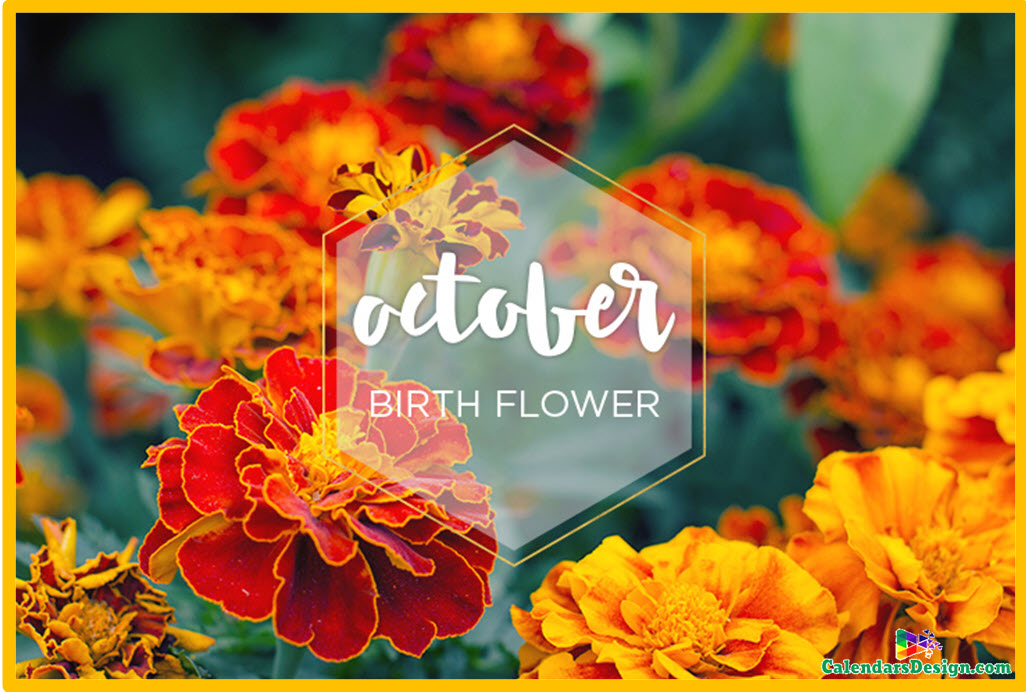 October Flowers Images