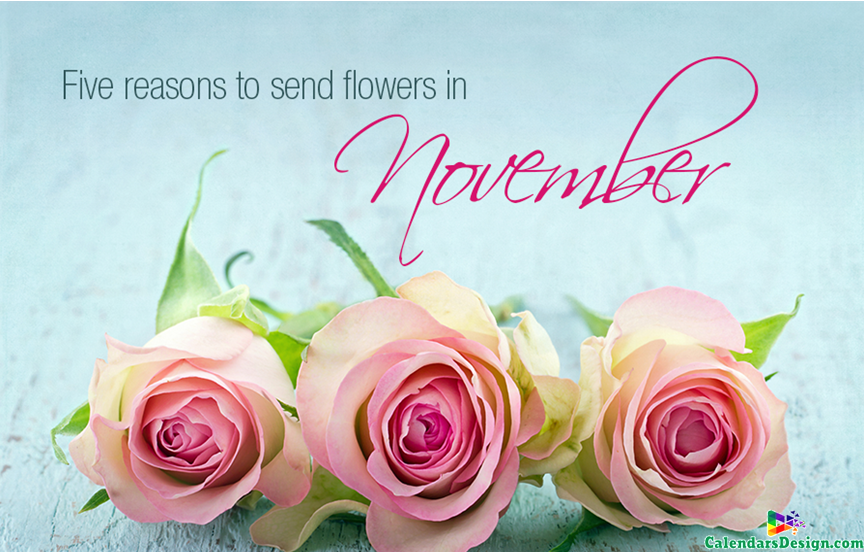 Flower for November Month