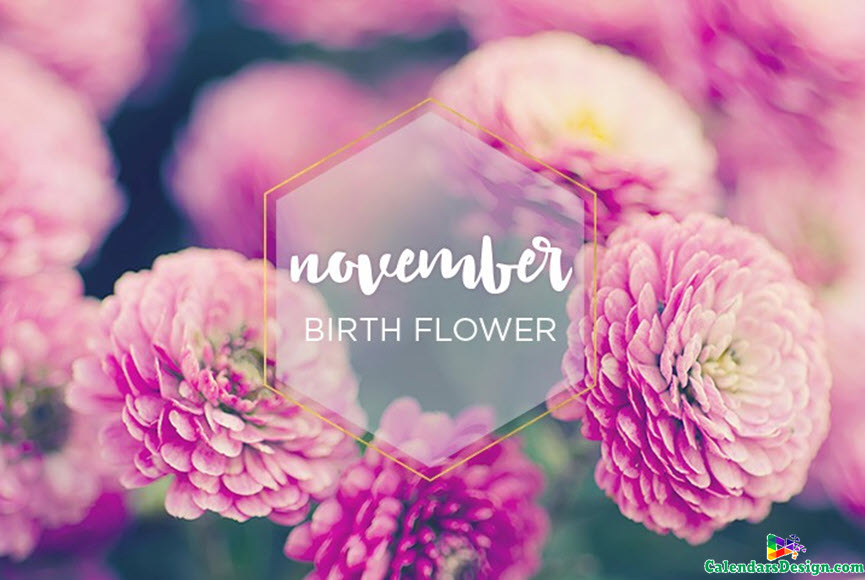 November Month Flowers Images